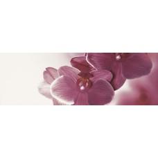 Abrila Kwiat B Декор (блестящий) 20х60